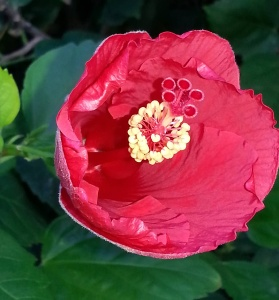il-flower